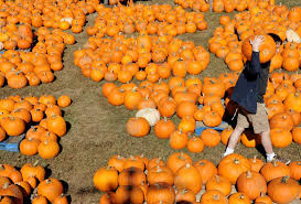 Sunnyside Pumpkin Patch Saratoga by Glad For What We Miss Times Union