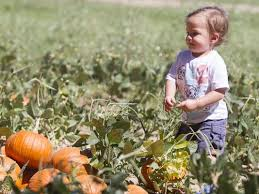 Schnepf Farms Halloween 2017 by Pumpkin And Chili Party At Schnepf Farms Offers The Best Of Fall