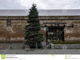 Download Tall Christmas Tree Near Red Brick Warehouse Stock Photo