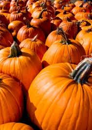 Gainesville Pumpkin Patch by List Of Pumpkin Patches Atlanta Real Vinings Buckhead