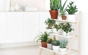 sukkulenten als zimmerpflanze die schönsten deko und