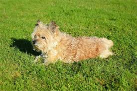 Using Pumpkin For Diarrhea In Dogs by 25 Incredibly Easy Home Remedies For Worms In Dogs That Will