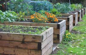 The Techniques And Benefits Gardening In Raised Beds