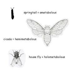 15 Misconceptions Kids And Adults Have About Insects