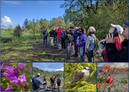 Mount St. Helens Institute : Learn : For Adults : Volcano ... Texas Backyard Naturalist Butterflies North Potomac Valley Audubon Society Pvas Habitats Bird Wallpapers The Backyard Bedroom Licious House Pool Ideas Best Pools Home Giles Frontier Brisbane Gum Trees At My Place Eucalyptus Major Amazing Most Professors Wife Snowy Owl Shorteared Owl