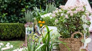 Best Plant For Bathroom Australia by How To Choose The Best Plants For Your Home Concrete Playground