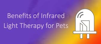 Infrared Lamp Therapy Benefits by Infrared Light Therapy For Pet Pain Lumasoothe