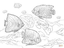Click The Koran Angelfish Coloring Pages