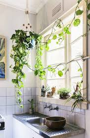 Houseplants Enliven The Small Space Source Nicolette Johnson Photography