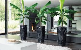 zimmerpflanzen schöne arten für jeden standort und pflege