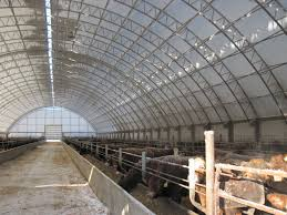 Agriculture - Winkler Structures New Technologies Available For Cowcalf Producers Hoop Barns Protect Cattle From Heat Iowa Public Radio Chip Shot Cstruction Best 25 Pole Barn Cstruction Ideas On Pinterest Building Barn Consider Deep Pack Cow Comfort And Manure Management 13 Frugal Diy Greenhouse Plans Remodeling Expense Barndominium Prices Day 6 Orazi Feedlot Pork Producer 22 Greenhouses With Great Tutorials Diy Greenhouse