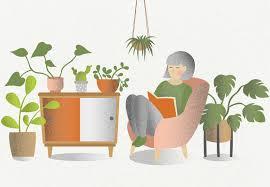 mythen und fakten über zimmerpflanzen lebenlang