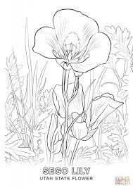 Utah State Flower Coloring Page Free Printable Pages Throughout California Incredible