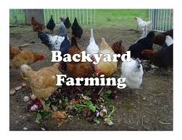 Home - Buck Moore Feed And Pet Supply LLC Backyard Livestock Quotes Archives City Farming Salmonella Is No Yolk When Raising Chickens News 2153 Best Show Girls World Images On Pinterest Showing 371 Livestock Farm Animals The Goat Next Door Chicagos Backyard Laws Youtube Pig In Dirty Stock Photos Image 30192453 5 Excellent Reasons To Keep Chickens Grow Network 241 Critters Life Valpo Family May Lose Their After Complaint Free Images Grass Bird White Farm Lawn Rural Food Beak What Raise On Your Homestead Or Cdc Are Giving Wellmeaning Owners