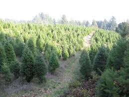 Santa Cruz Christmas Tree Farms by Summit Christmas Tree Farm Home Facebook