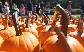 Gainesville Pumpkin Patch by Pumpkin Patch Where Are The Best Near Atlanta