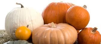 Drilled Pumpkin Designs by 13 Pumpkin Decorating Ideas Bags U0026 Bows