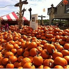 Pumpkin Picking In Ct by 17 Best Danbury Connecticut Images On Pinterest Danbury