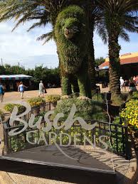 busch gardens – Florida Adventurer
