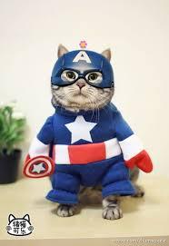 cat batman costume meowsers a dozen costumes for your favorite feline
