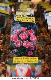 tulips bulbs for sale at amsterdam flower market amsterdam stock