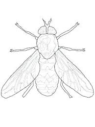 Dragonfly Coloring Pages Page Preschool Wonderful Fly For Your Dragon Cute Drago