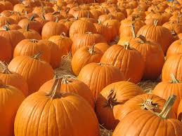 Free Pumpkin Patch Charleston Sc by October U2013 Earl Haig Eagles U0027 Nest