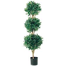 Preserved Topiary Outdoor Boxwood Balls Trees