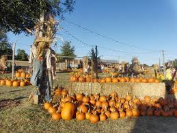 Pumpkin Patch Marble Falls by The Best Pumpkin Patches In Texas Having Fun In The Texas Sun