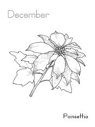 Poinsettia Flower On December Coloring Page