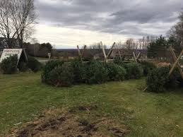 What Kind Of Trees Are Christmas Trees by Whats The Best Christmas Tree Christmas Lights Decoration