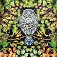 Colouring For Adults Garden Owl Coloring Book Johanna Basford Secret Gardens Owls Clever