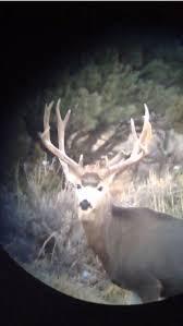 66 best sheds images on pinterest elk hunting sheds and antlers