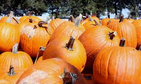 Pumpkin Patch South Bend by Pumpkin Patches A Fall Tradition Iowa On The Go