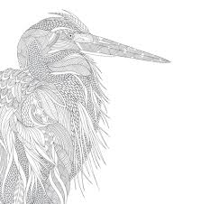 Animal Kingdom Colouring Images Coloring Pages Millie Marotta S A