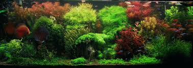 Aquascaping Forum Interview With Appartment Aquascaping Forum ... King5com Fding Zen Through Aquascapes The Worlds Newest Photos By Pacific Aquascape Flickr Hive Mind Pacific Aquascape 28 Images Westin Photo Courtesy Of Christian Another Beautiful Pool Aquascapes For Luxury Living In Swimming Pool Contractors In Oahu Hi Aquascapes Ada Aquascaping Contest Homedesignpicturewin Submerged Jungle Fekete Tamas Awards Jungle 241 Best Aquatic Garden On Pinterest Aquascaping 111 Amazing Aquariums And The666 Extreme18
