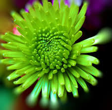 169 Best All Things GREEN Images On Pinterest