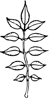 Leaves black and white pile leaves clip art black and white clipart library free
