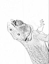 Bearded Dragon Adult Coloring Shading Book By BeardieBigUps