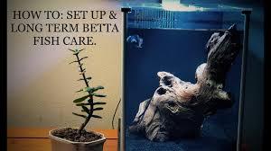 Spongebob Aquarium Decor Set by How To Set Up U0026 Long Term Betta Fish Care In 4k Siamese Fighting