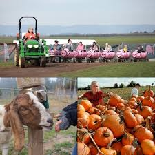 Sauvies Island Pumpkin Patch Corn Maze by Your 2017 Guide To Pumpkin Patches And Harvest Festivals In The