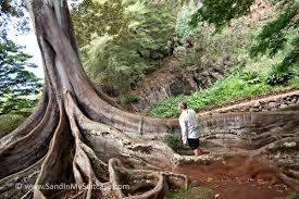 Botanical Kauai The Allerton and McBryde Gardens