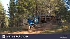 Truck Loaded With Logs Harvested From Forestry Plantation Travelling ... Altec Lrv58 Forestry Bucket Truck For Sale Youtube Arts Trucks Equipment 3618658 04 Ford F750 Uos On Twitter Our Tandem Axle Xt 70 Pro Work With 24houraday Uptime Scania Newsroom Central Sasgrapple Saleforestry And Timber Truck Services 2008 Liftall Lss601s 65 Big Loaded Logs Harvested From Forestry Plantation Travelling Mackdag 2012 Mack Nr Engine Sound 35318 98 Fseries