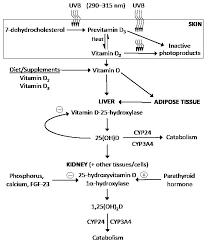 acta dermato venereologica factors influencing vitamin d status