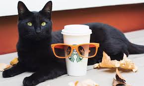 When Are Pumpkin Spice Lattes At Starbucks by Watch Starbucks Pumpkin Spice Latte Hatch On Facebook Live Extra