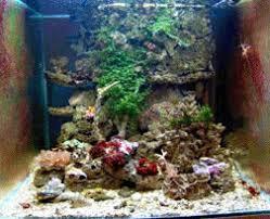 aquarium eau de mer recifal debuter conseils amenagement decor