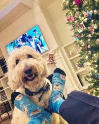 20% Off - PupSocks Coupons, Promo & Discount Codes ... Verified Petco Coupons Promo Codes 30 Off September Peachjar Flyers Pond 5 Promo Code Kobo Discount Coupon Foster And Smith Coupon Fniture Mattrses In Mechanicsburg Harrisburg Camp Ohio State Ati Electric Tobacconist Uk Delgrosso Season Pass Yueling Light Lager Jogger 5k 2019 Postrace Block Party 25 Frenchie N Pug Top Ocean Nail Supply Foster Codes 2016