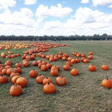 Free Pumpkin Patch In Katy Tx by Dewberry Farm 170 Photos U0026 105 Reviews Pumpkin Patches 7705