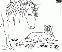 A Newborn Foal Coloring Page