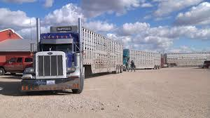Trucking Firms Worried Electronic Logging Device Could Hurt ... Livestock Transportation Basics Truckdrivingjobscom July 2017 Trip To Nebraska Updated 3152018 Big Timber Montana Pt 4 Job Posting Dicated Bull Hauler Steves Transport Facebook Minnesota Trucking Companies Mn Driver Benefits Package At Hunt Flatbed Youtube Stidham Inc Marbert Truck Carrying 78 Head Of Cattle Rolls Dash Camera Captures Footage Jobs Express